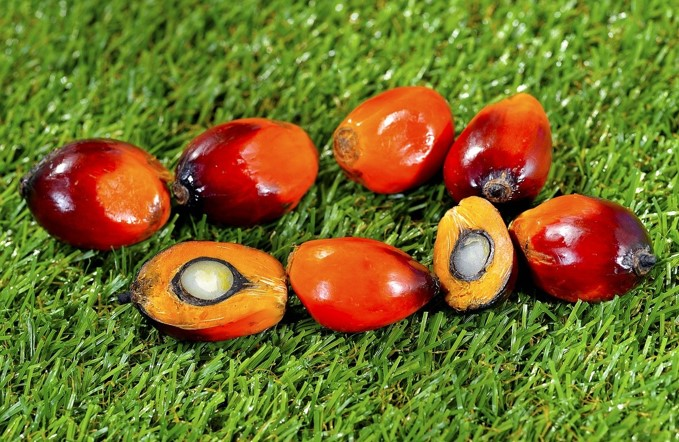 How Does The World Benefit From Sustainable Palm Oil?
